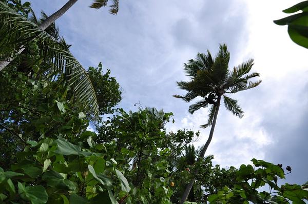 岛上的植被挺茂密的