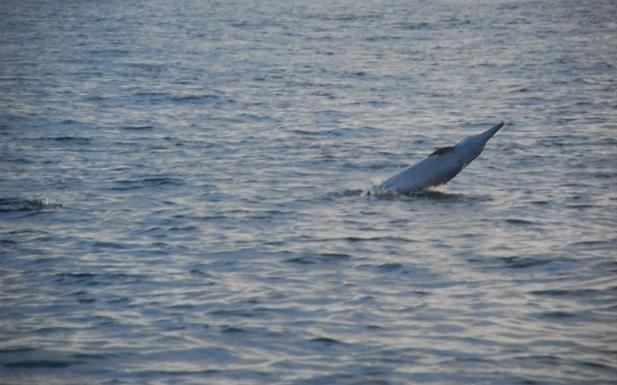 海豚是种聪明可爱的动物,一点也不怕人.